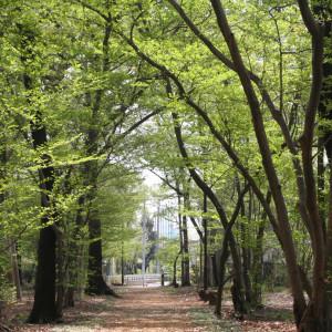 北本中央緑地