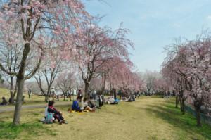 高尾さくら公園5