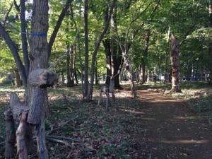 雑木林リサイズ1