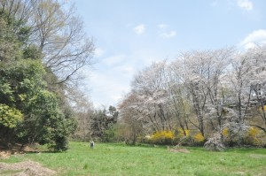 春の観察公園