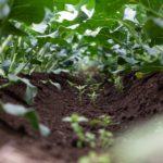 &greenCOLUMN vol.1 内田農園の初夏採り野菜