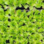 &greenCAFE-となりの野菜はこんなに美味しい-