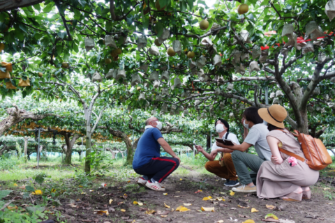 やっぱりその時期に食べるから旨い。新井果樹園の梨